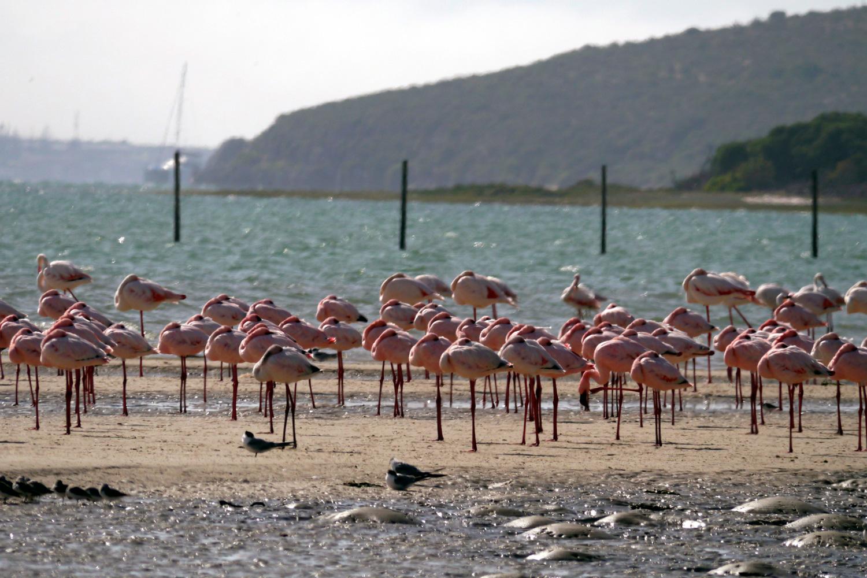 flamingo1_k