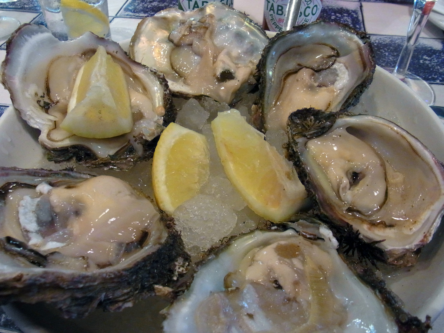 oyster1_k